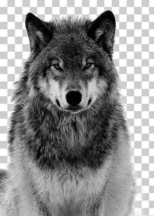 Dog Arctic Wolf Coyote Canidae Tiger PNG