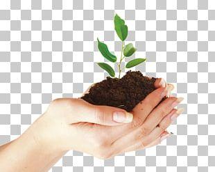 Organic Food Organic Fertilizer Fertilisers Manure Organic Cotton PNG