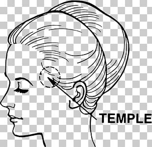 Temple Head And Neck Anatomy Temporal Bone Temporal Lobe PNG