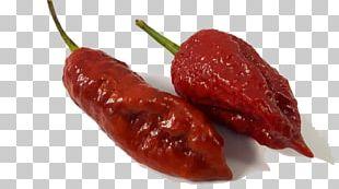 Habanero Piquillo Pepper Chile De árbol Bird's Eye Chili Tabasco Pepper PNG
