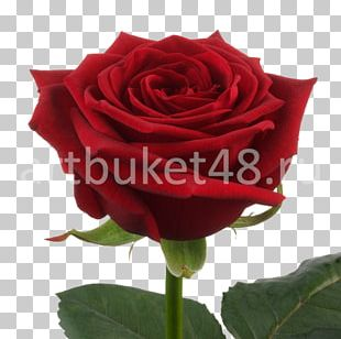 Garden Roses Flower Bouquet Red Cut Flowers PNG