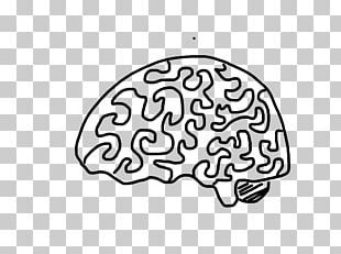 Brain Drawing Cerebrum Nervous System Cerebellum PNG