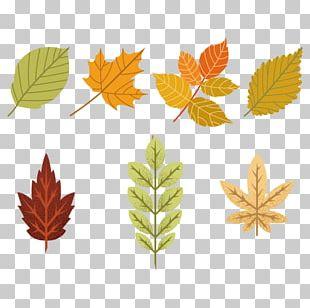 Maple Leaf Tree PNG