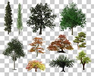Tree Shrub Desktop PNG