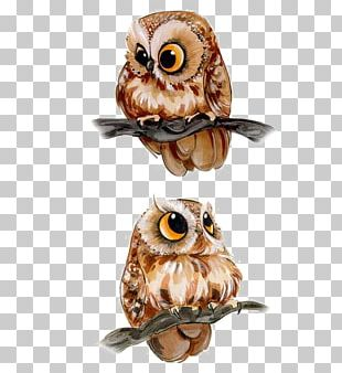 Barn Owl Drawing Bird PNG