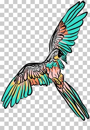 Beak Feather Macaw Art PNG