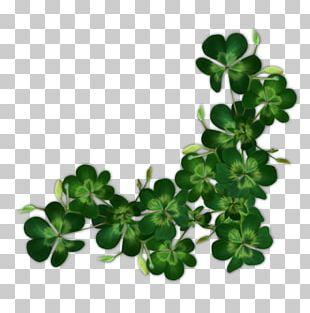 Saint Patrick's Day Shamrock Ireland Irish People PNG