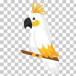 Bird Euclidean True Parrot PNG