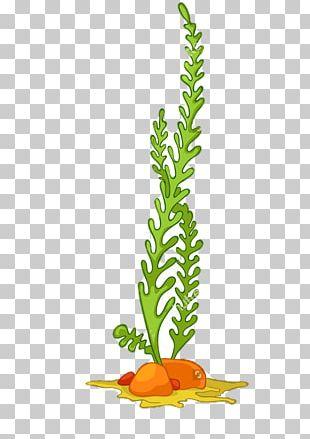 Algae Seaweed Aquatic Plants PNG
