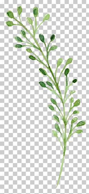 Watercolor Painting Green PNG