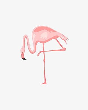 Flamingo Illustration PNG