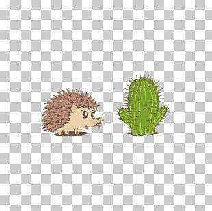 Hedgehog Illustration PNG
