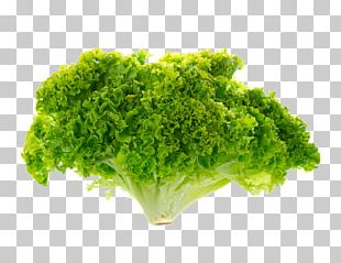 Romaine Lettuce Stock Photography Red Leaf Lettuce PNG