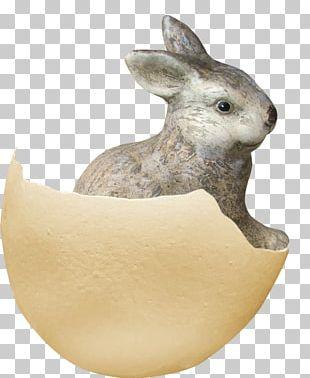 Domestic Rabbit Eggshell PNG
