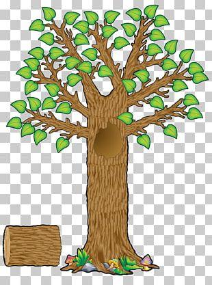 Bulletin Board Tree Teacher Education Student PNG