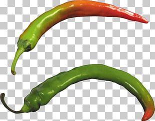 Bell Pepper Jalapeño Chili Pepper Cayenne Pepper PNG