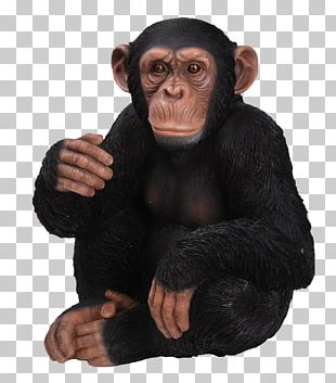 Chimpanzee Gorilla Ape Ornament Sitting PNG