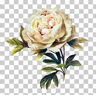 Flower Floral Design Rose Painting Mosaic PNG