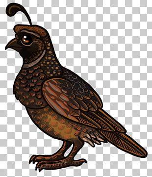 Bird Of Prey Beak Hawk Galliformes PNG