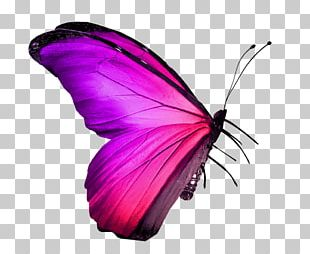 Butterfly Insect Stock Photography Red PNG