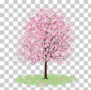 Cherry Blossom PNG