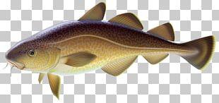 Common Carp Carp Fishing Goldfish PNG