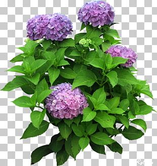 Flower Plant Tree PNG