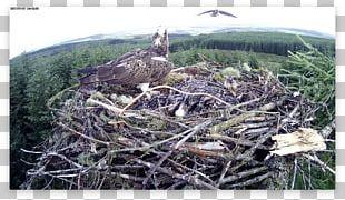 Bird Nest Fauna Bird Of Prey NEST+m PNG