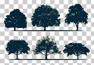 Silhouette Oak Tree PNG