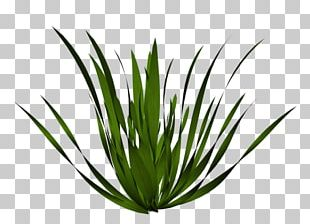 Plant Drawing Tree Grasses PNG