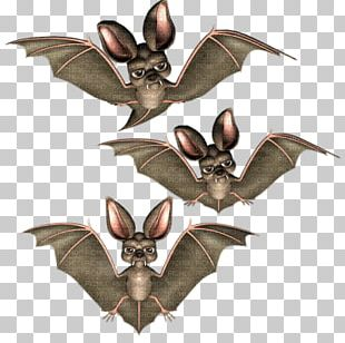 Halloween Bat Boszorkány PNG