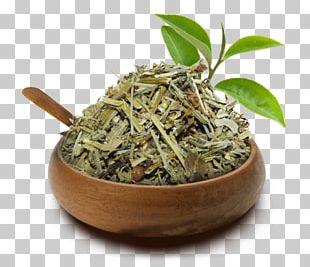Hibiscus Tea Hōjicha Green Tea Equisetum PNG