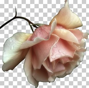 Romance Love Urdu Poetry Morning Good PNG