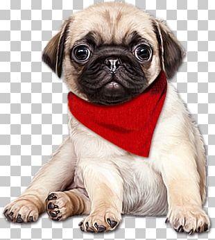 Pug English Mastiff Puppy PNG