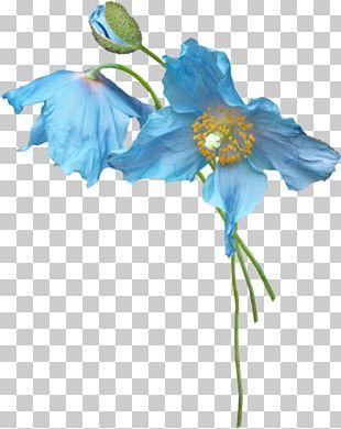 Petal Blue Flower Plant Stem PNG