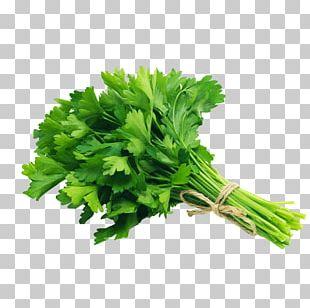 Organic Food Parsley Vegetable Herb Grocery Store PNG