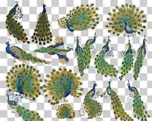 Embroidery Peafowl Cross-stitch Feather Handicraft PNG