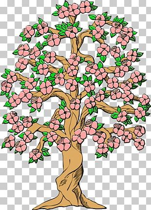 Tree Cherry Blossom Spring PNG