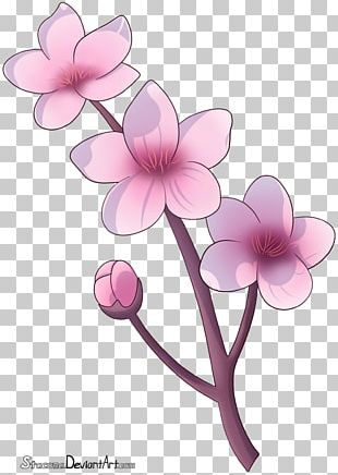 Cherry Blossom Drawing Flower Petal PNG