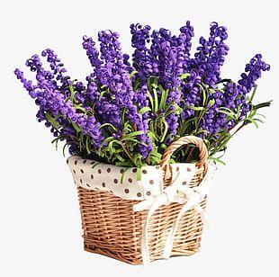 Lavender Flower Baskets PNG