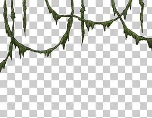 Angle Leaf Rectangle PNG
