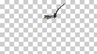 Bird Of Prey Bat Fauna Beak PNG
