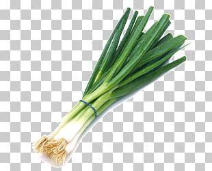Allium Fistulosum Scallion Vegetable Chives Shallot PNG
