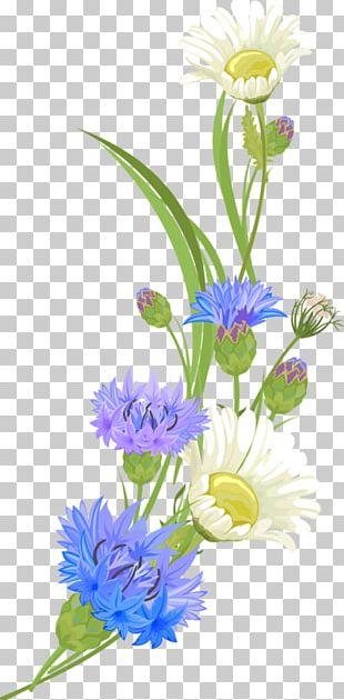 Chrysanthemum Indicum PNG