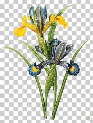 Watercolor Painting Botanical Illustration Printmaking Art PNG