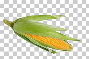 Corn On The Cob Waxy Corn Sweet Corn Stock Photography Corncob PNG
