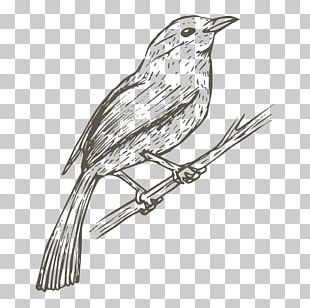 Bird House Sparrow Drawing Sketch PNG