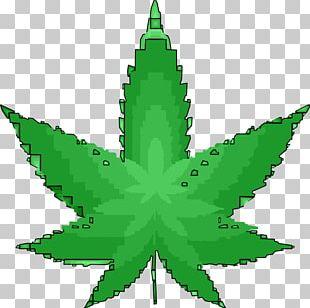 Medical Cannabis 420 Day Cannabis Sativa Bong PNG