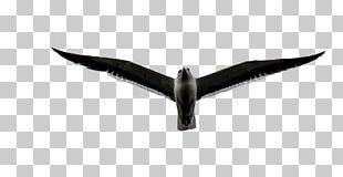 White Black Angle Beak Font PNG