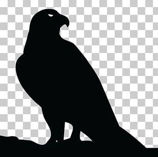 Beak Bird Of Prey Fauna PNG